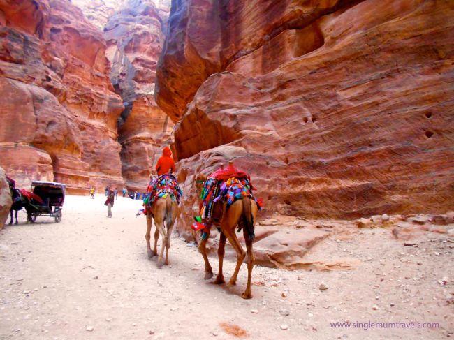 Camel Trekking in Petra